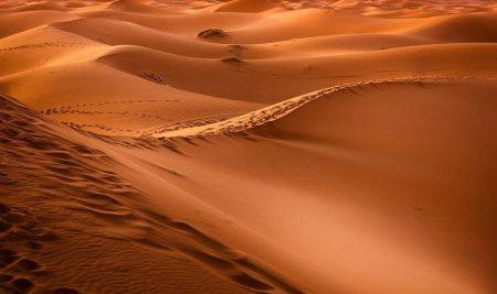 คุณจะเอาชีวิตรอดอย่างไร? เมื่อคุณฟื้นขึ้นมาแล้วพบว่าตัวเองอยู่กลางทะเลทราย